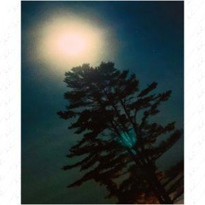 """40th Anniversary Print - """"Moonbeam"""""""